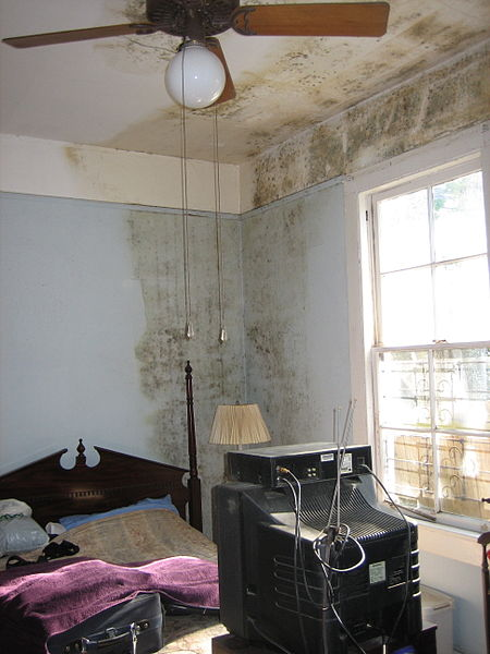 Mold Can Ruin Your Home