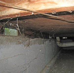 Create A Clean Crawlspace